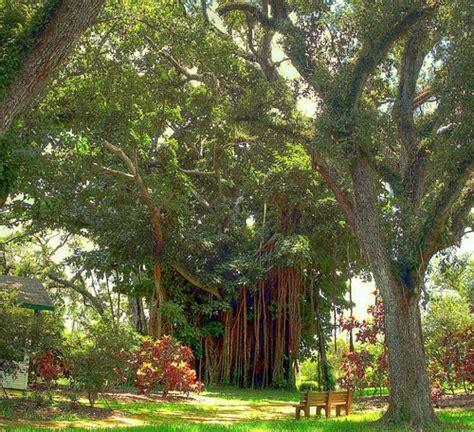 botanical gardens fort lauderdale ft lauderdale botanical gardens bonnett house museum