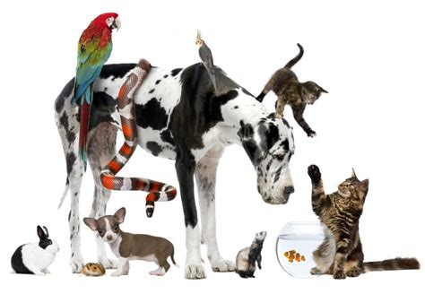 Introducing a new contributing author Groupings Of Animals