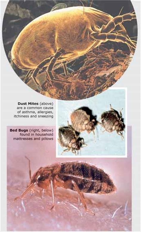 dust mites in bed dust mites in bed bedding sets
