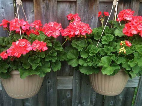 plants  hanging baskets ideas  images
