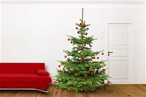 den weihnachtsbaum frisch halten