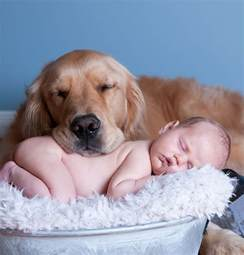 Dogs 10 Pics That Prove Dogs Are Better Than A Pillow Bored