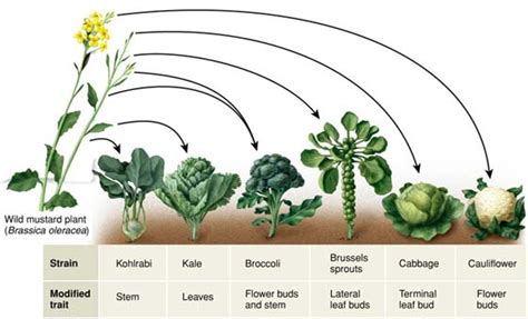 kale broccoli and cabbage replace traditional flowers as kale broccoli brussels sprouts and cabbage are all the