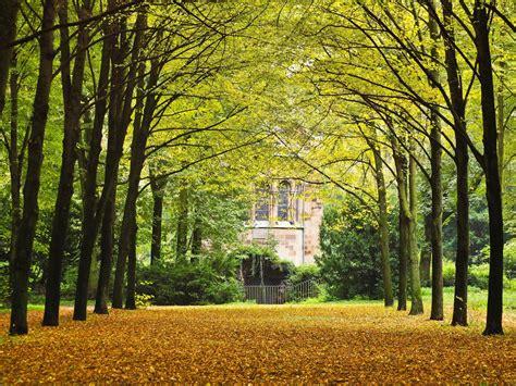 Lu Taman Sinar Matahari gambar alam hutan menanam jalan halaman rumput