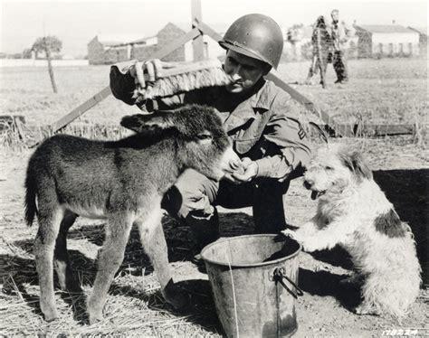 buddies soldiers  animals  world war ii national