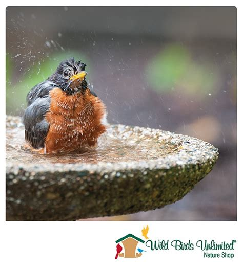 Wild Birds Unlimited Gift Card - wild birds unlimited nature shops in reno sparks moana nursery