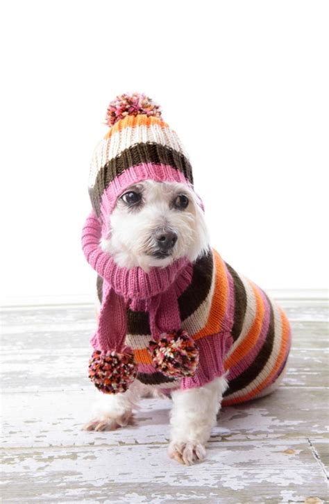 puppy shivering tips for keeping your warm in cold winter weather ny daily news