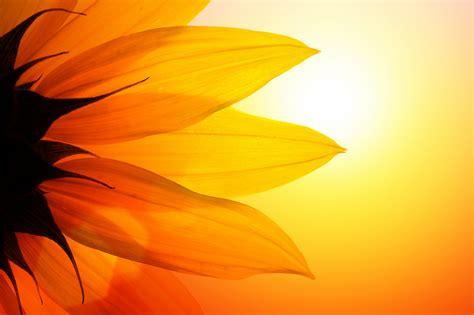 sound reiki healing meditation nov  catherine varga