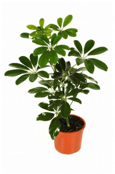typical house plants pictures of most common house plants house pictures