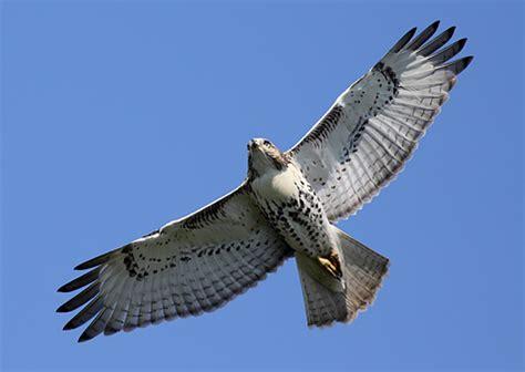 how to get sharp photos of birds in flight photonaturalist