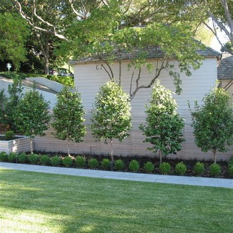 trees in backyard dig the clear separation of lawn from fruit trees fruit trees back yard design ideas