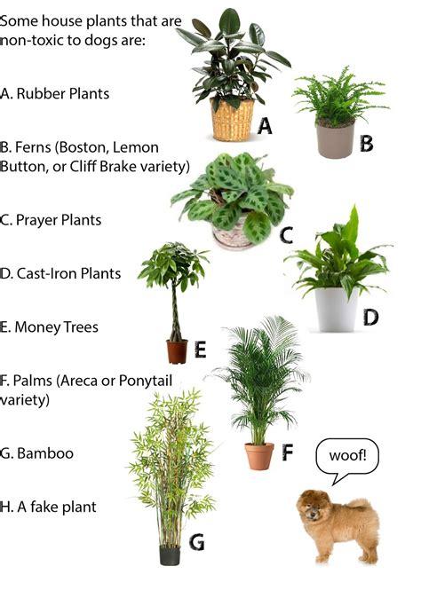dog friendly house plants house plants low light cat safe 28 images low light houseplants low wiring diagram