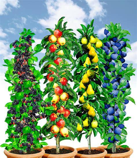 Obst Und Garten 5172 by S 228 Ulen Obst Kollektion Fr 252 Chtemix Sonderartikel Bei