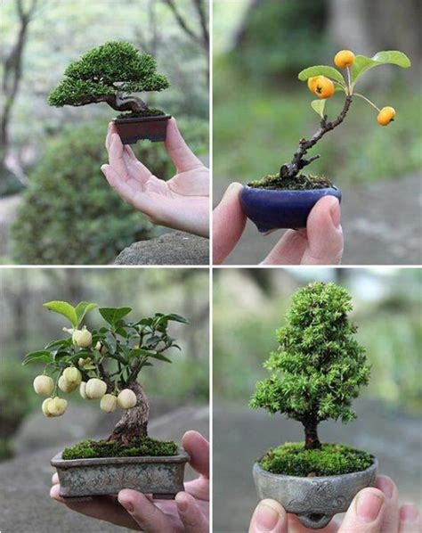 artistic use of gardening techniques bonsai miniature