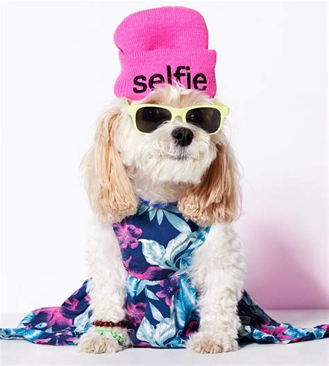 clothes for dogs american eagle clothes line popsugar fashion