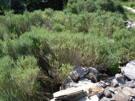 giardino aromatico il mio giardino aromatico ma sappiamo cos 232 una pianta