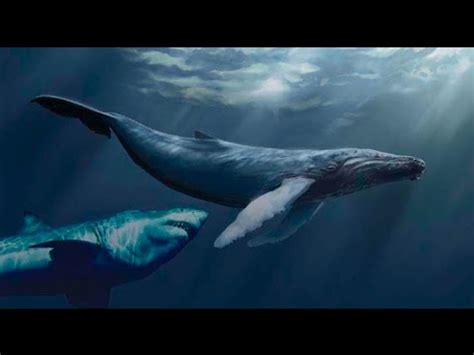 megalodon shark proof and evidence!? real megalodon 2014