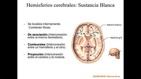 hemisferios cerebrales sistema de fibras youtube
