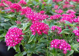 flowering shrubs for florida plant perennials in your south florida garden garden club