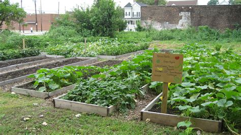 Community Vegetable Gardens Grow Your Own Vegetable Garden In Limited Space