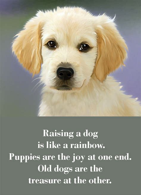 raising a puppy 42 sayings which will touch your