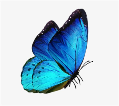 Butterfly Blue blue butterfly butterfly clipart blue butterfly png