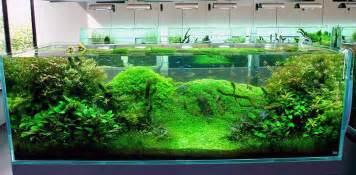 aquascape tank for sale fish tank ideas cool fish tank decoration ideas