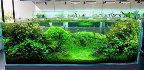 aquarium design japan fish tank ideas cool fish tank decoration ideas