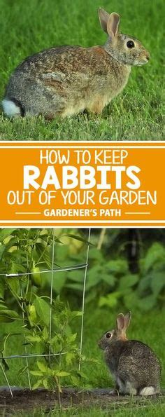 how to keep pests out of vegetable garden how to keep rabbits out of your garden easter bunny