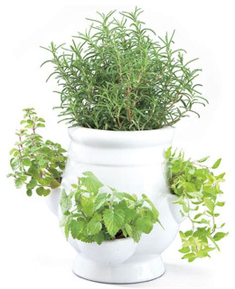 Indoor Windowsill Herb Garden by Windowsill Herb Garden Kit Traditional Indoor Pots And