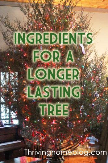 add sugar to christmas tree water best 25 tree water ideas on tree table decorations advent