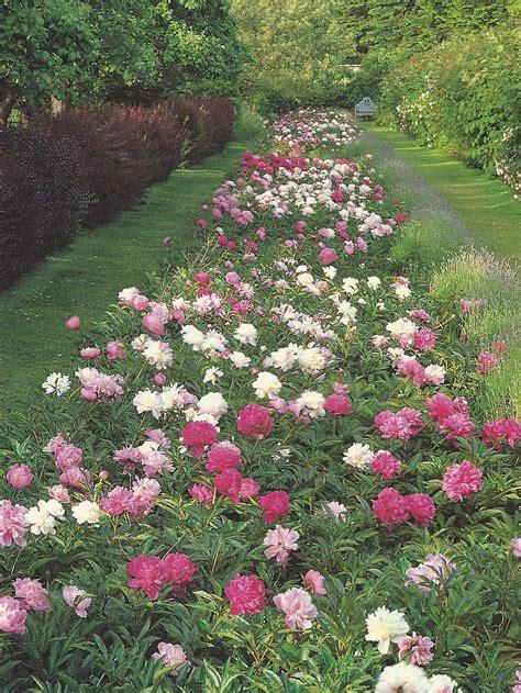 Peony Garden by Peony Garden Design Crickethillgarden