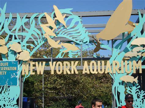 aquarium design new york image gallery ny aquarium logo