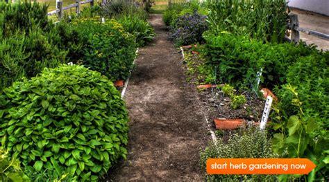 table top herb garden growing a kitchen herb garden epicurious com