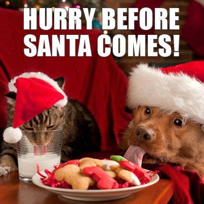 Christmas Animal Meme - 12 best images about holiday memes on pinterest seasons