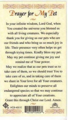 dog prayers  sick dogs httpwwwcatholicstorecom