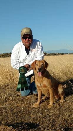 norcal golden retriever breeders thunderstruck retrievers golden retriever puppies in minnesota golden retriever