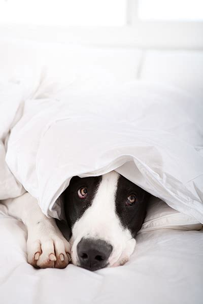 noises dogs what is noise phobia on dogs cats advantage petcare