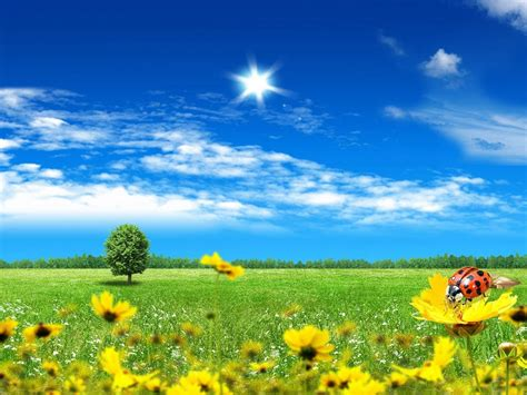 summer day artistic wallpaper  wallpaperscom