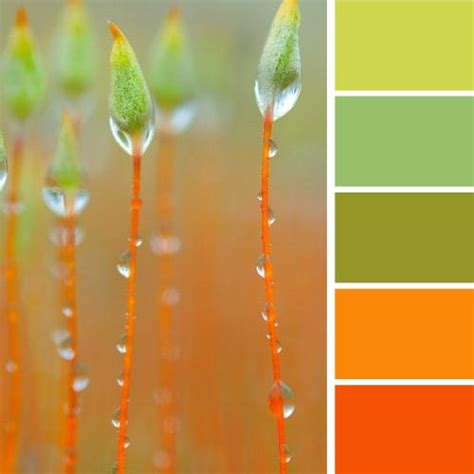 color combination for orange orange green color palette www pixshark com images