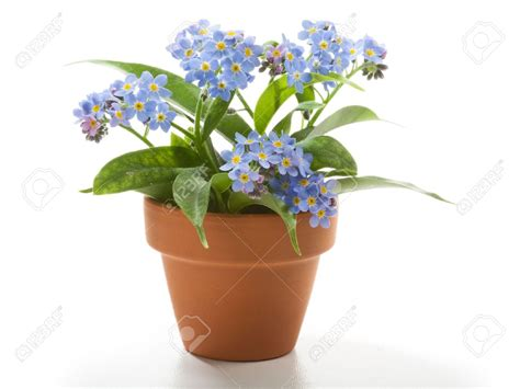 Flower Pot Part 1 Weneedfun Flowers For Garden Pots
