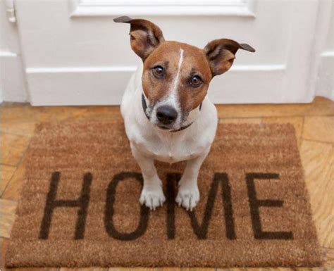 cani di razza piccola per appartamento le 29 razze di adatte per l appartamento 1a parte