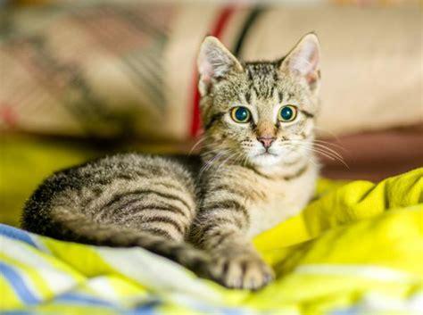 i gatti soffrono la solitudine riducono lo stress with i