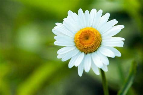 antistaminico per allergia alimentare calendari dei pollini per il settimana vivere con