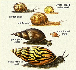 Where Can You Find Snails In Your Backyard by Keeping Pet Snails Home