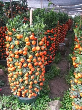 cara menanam sayur dan buah buahan hidroponik sederhana di ilmu dasar bertanam tabulapot indonesia bertanam