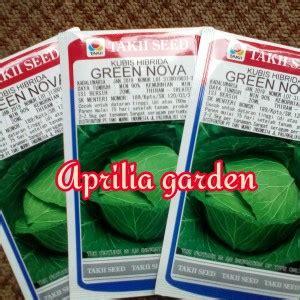 Kol Kubis Green kubis cabbage green aprilia garden