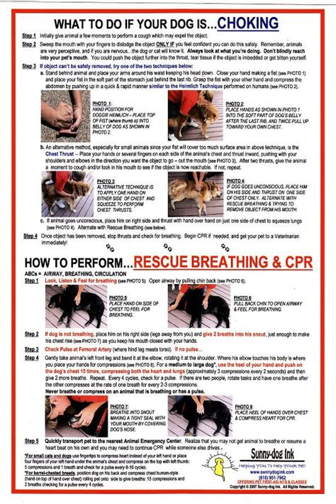 cpr for dogs the world s catalog of ideas