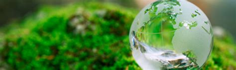Mba In Environmental Science by Environmental Science And Studies Faculty And Staff