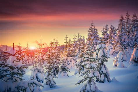 images of christmas nature winter nature snow tree sunset winter snow nature tree